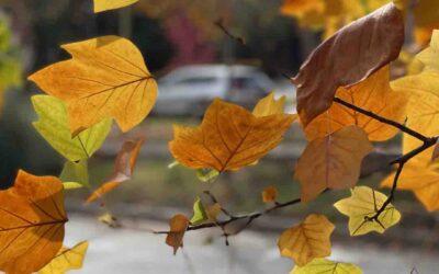 La fuerza del otoño